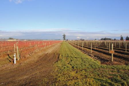 acreage: Raspberries and Blueberries on a large farm acreage.