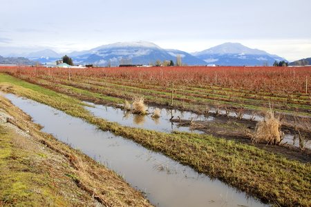 saturated: Crops and farmland are saturated during the winter in Canadas west coast. Stock Photo