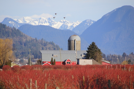 acreage: A berry farm surrounded by snow capped mountains during the winter months.