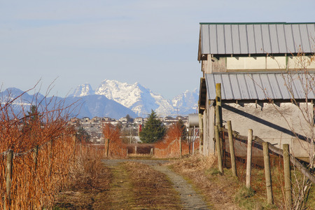 describe: Snow capped mountains and red blueberry crops describe winter in British Columbias Fraser Valley.