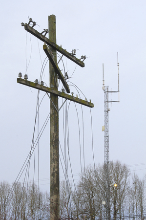 An old, battered telephone pole stands near a modern telecommunications tower.