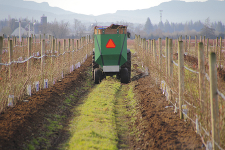 adds: A Washington farmer adds enriched soil to the blueberry crop.