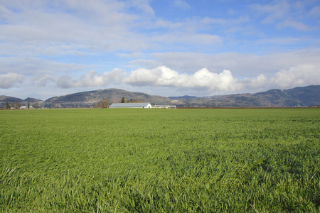 expansive: Wide expansive rural land in Canada and its  productive landscape.