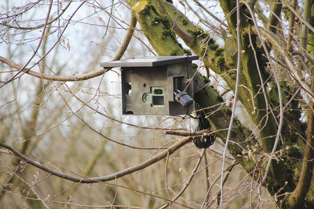 A secured camera mounted in a tree to photograph nature. Stok Fotoğraf
