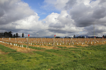 acreage: Hard labor and investment will contribute to a new, successful berry crop.