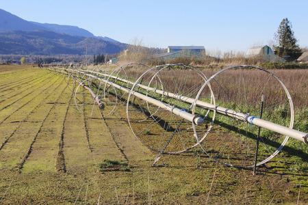 irrigation field: Irrigation wheels are lined up on a Washington farm acreage.