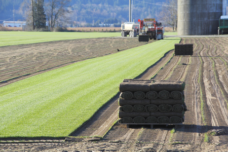 turf pile: Carpets of turf or grass is stripped away to be sold commercially.