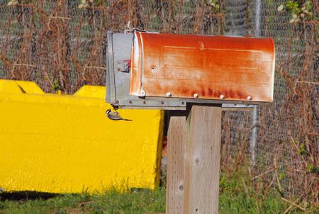 A curious Wren investigates an outdoor mailbox.