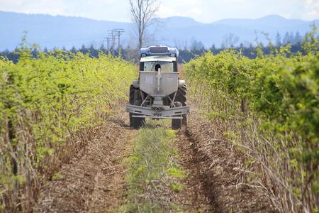 nutrientes: Un agricultor de Washington añade nutrientes para su cultivo de frambuesa.