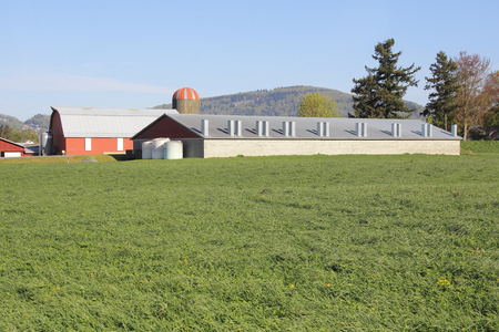 well made: A solid brick farm building used for housing dairy cows. Stock Photo