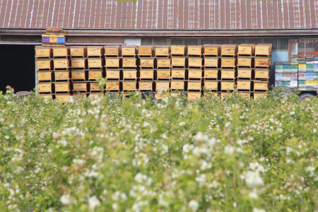 neatly stacked: Bee boxes are neatly stacked and will be distributed throughout a blueberry field for pollination.