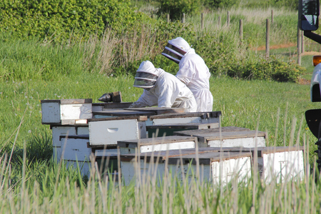 Beekeepers collect and remove honey from commercially made boxes. Stock Photo