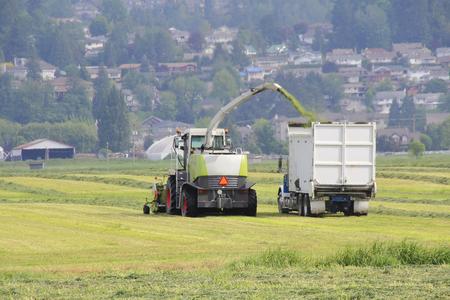 farm machinery: Farm machinery harvesting acres of freshly cut hay.