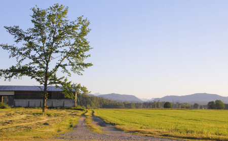 expansive: Early morning on an expansive Canadian farm surrounded by rolling hills. Stock Photo