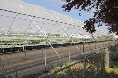 commercially: A greenhouse is open and exposed to the outdoors where flowers are grown commercially for the retail market. Stock Photo