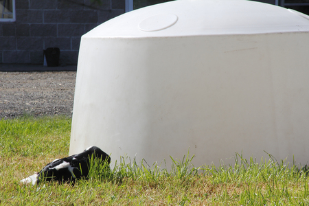 hutch: A calf hutch where calves spend their short lives before slaughtered for veal meat.