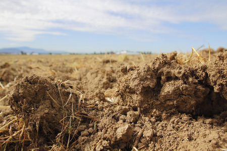 over worked: Close on a freshly plowed field revealing rich, organic soil.