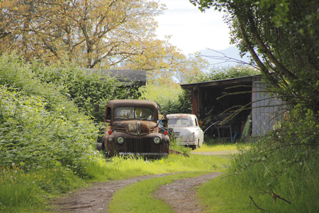 Two vehicles, a truck and car, sit forgotten and neglected in the backyard.