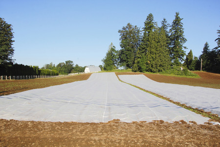 acreage: Sheets of plastic are used to cover seeds planted in a corn field.