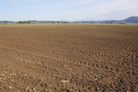 wide open: Wide open acres of agricultural land used for growing vegetables. Stock Photo
