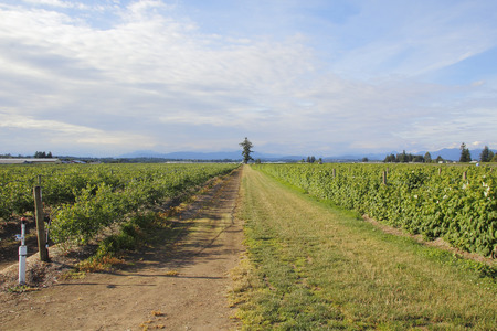 acreage: Fruit is a major player in British Columbias agricultural industry.