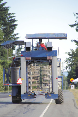 operates: A woman operates a large berry picking vehicle.