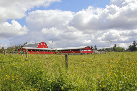 cows red barn: A wide view of a large, red dairy barn in a rural landscape.