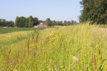 agricultural area: Land in an agricultural area is thriving during the warm summer months.