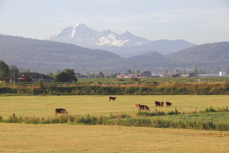 pacific northwest: Prime grazing land near Washingtons Mount Baker in the Pacific Northwest.