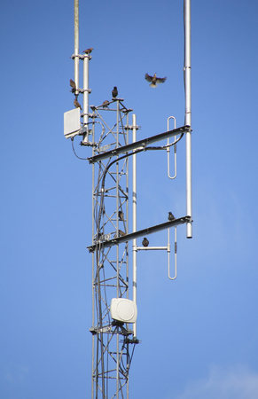 Starlings는 현대 전자 안테나를 사용하여 집회 및 퍼치를합니다. 스톡 콘텐츠