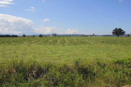 acres: Acres of cut grass lay in a Canadian field to dry.