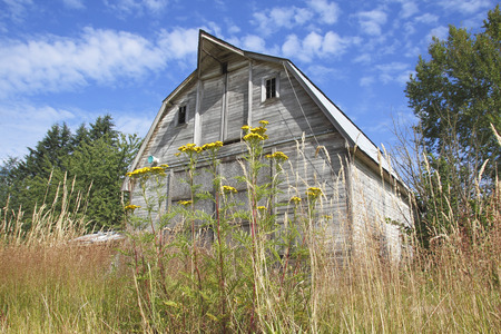 surrounds: Tall, dry summer grass surrounds a traditional American wood frame barn. Stock Photo