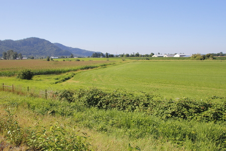 fraser: Rural country in the BC Lower Mainlands Fraser Valley district.