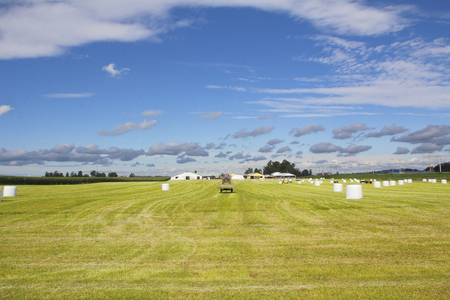 bundled: Grass has been harvested and bundled during the summer months in BCs Fraser Valley.