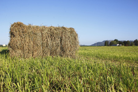 fastened: A single, large hay bale has been bound and wrapped and sits in the field ready for pickup. Stock Photo