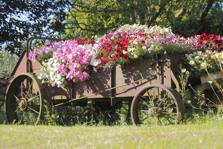 An old farm implement provides an avid horticulturalist with a creative floral arrangement.