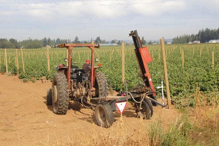 Machinery is used to install posts that will be used to support raspberry vines. Stock Photo