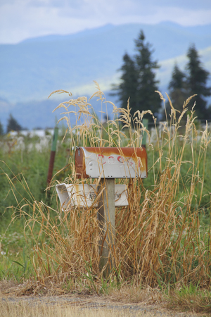 surrounded: Mailboxes, surrounded by tall grass, in the rural countryside.