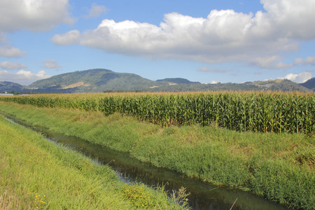 runoff: Deep ditches filled with mountain run-off provide crops with water during the dry summer months. Stock Photo
