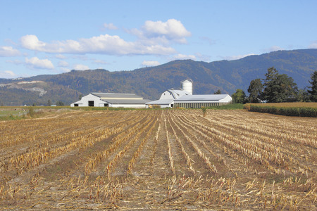 canadian pacific: Corn crops have been harvested in a Canadian valley farm.