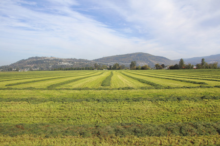 bundling: Grassland or hay field has been cut and ready for bundling on a Canadian farm. Stock Photo