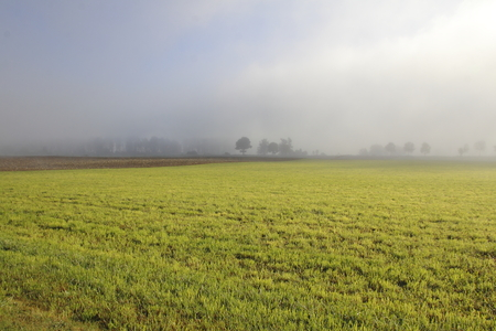 Thick fog blankets a rural area comprised of agricultural land.