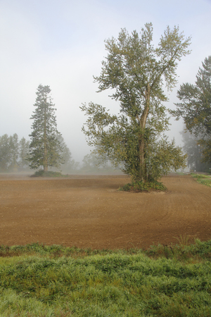 Vertical view of a rural area where thick fog is lifting.