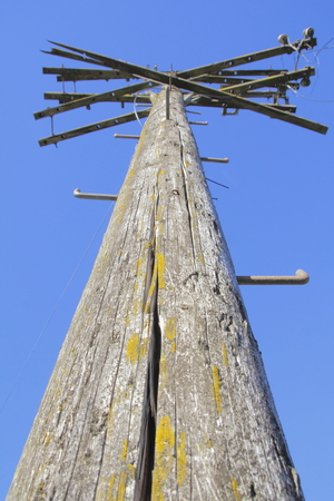 telephone pole: Cracked and weathered, an old telephone pole with step spikes for climbing.