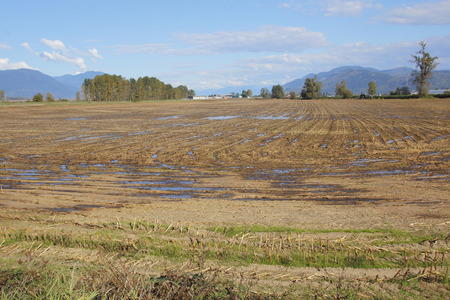 Pools of liquid manure on saturated agricultural land.