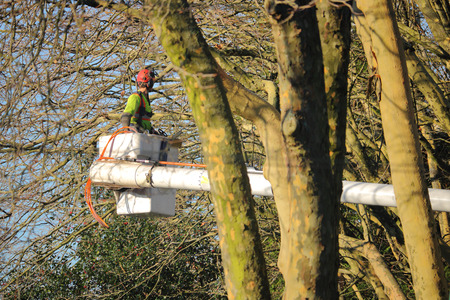 trimmer: A professional tree trimmer spends the winter months trimming branches Stock Photo
