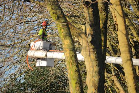 Een professionele boom trimmer brengt de wintermaanden snoeien takken