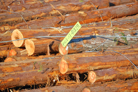 stapled: Tags fastened to a log boom provide information for processing.
