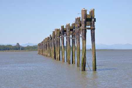 Posts used for securing fishing boats are all that remains of a once thriving fishing industry on the Fraser River in south west British Columbia, Canada.