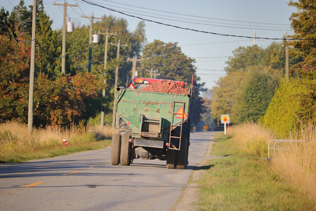 A truck loaded with harvested red potatoes on a two lane country road.